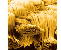 マイクロモダール断面図
